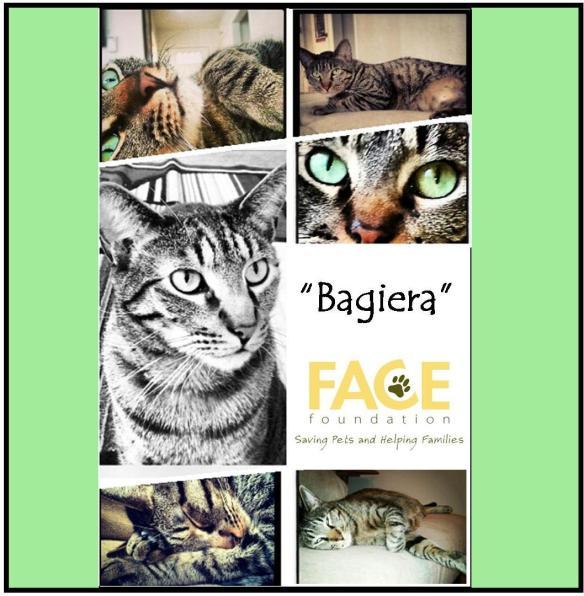 Meet Bagiera!