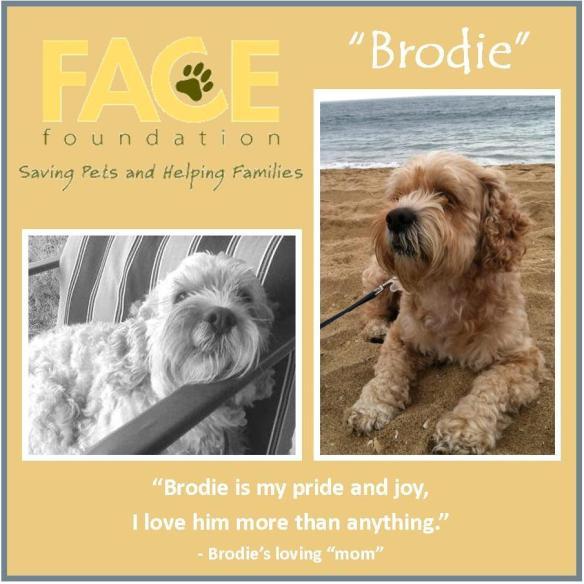 Meet Brodie!