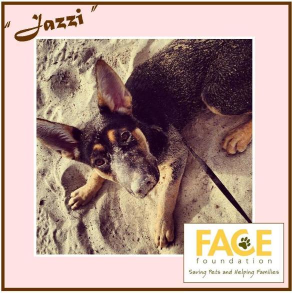 Meet Jazzi!