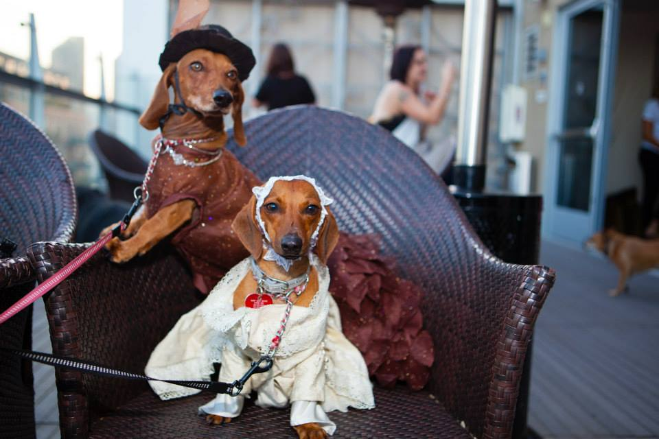 Fido Fashion Show Photos!