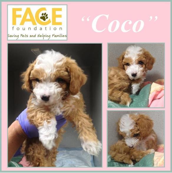 Meet Coco!