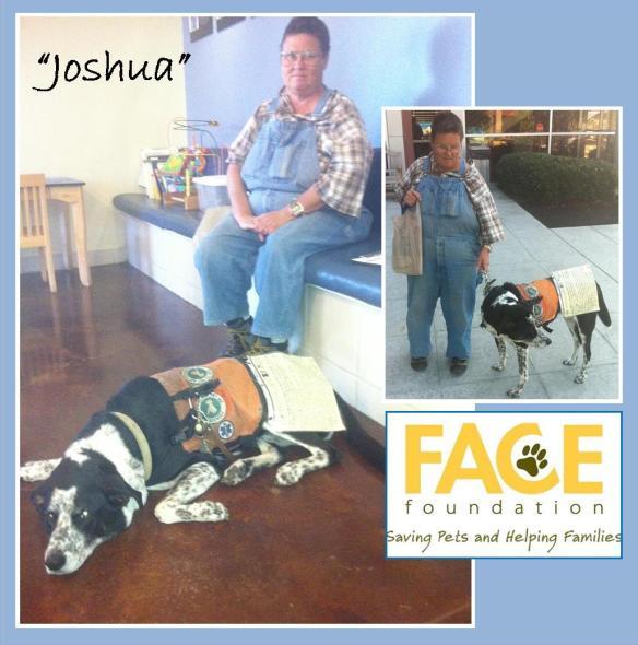 Meet Joshua!
