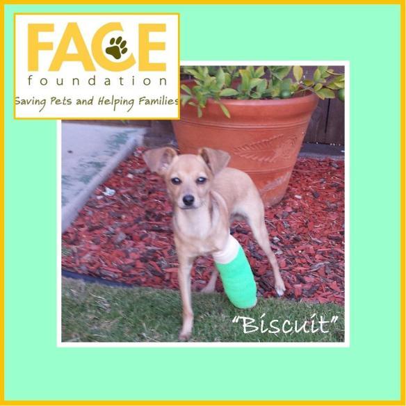 Meet Biscuit!