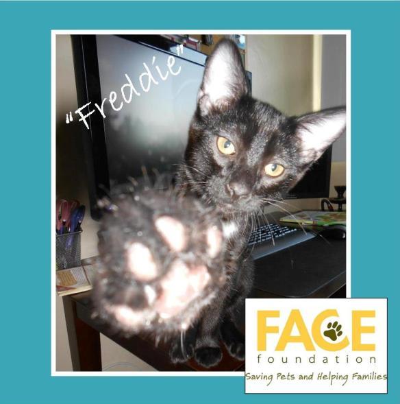 Meet Freddie!