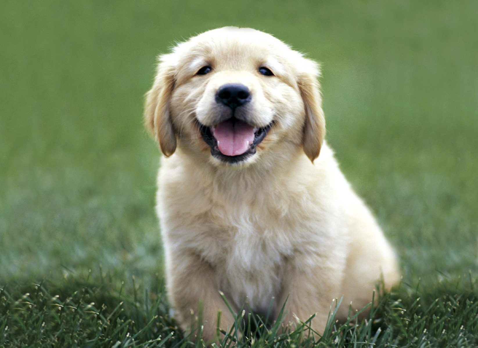 House Training Your New Puppy – FACE Foundation