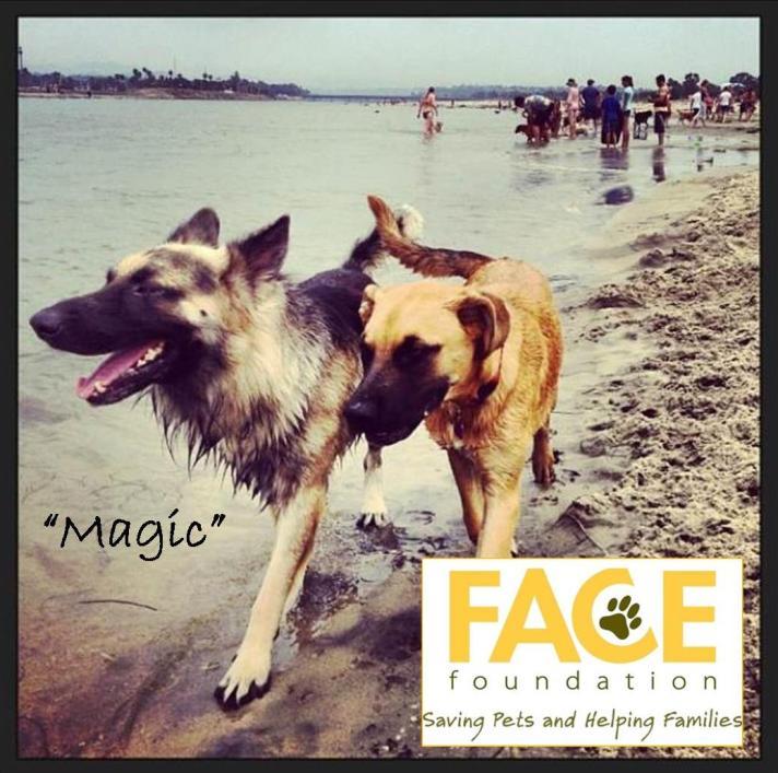 Meet Magic!