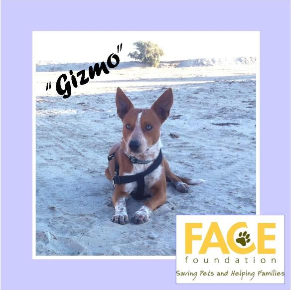Meet Gizmo