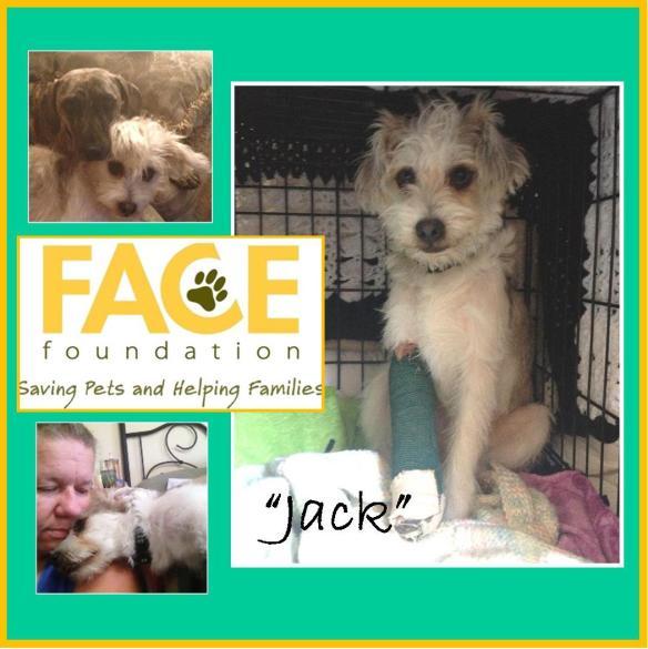 Meet Jack!