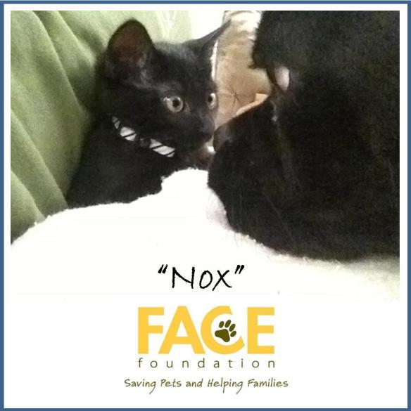 Meet Nox!