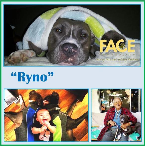 Meet Ryno!