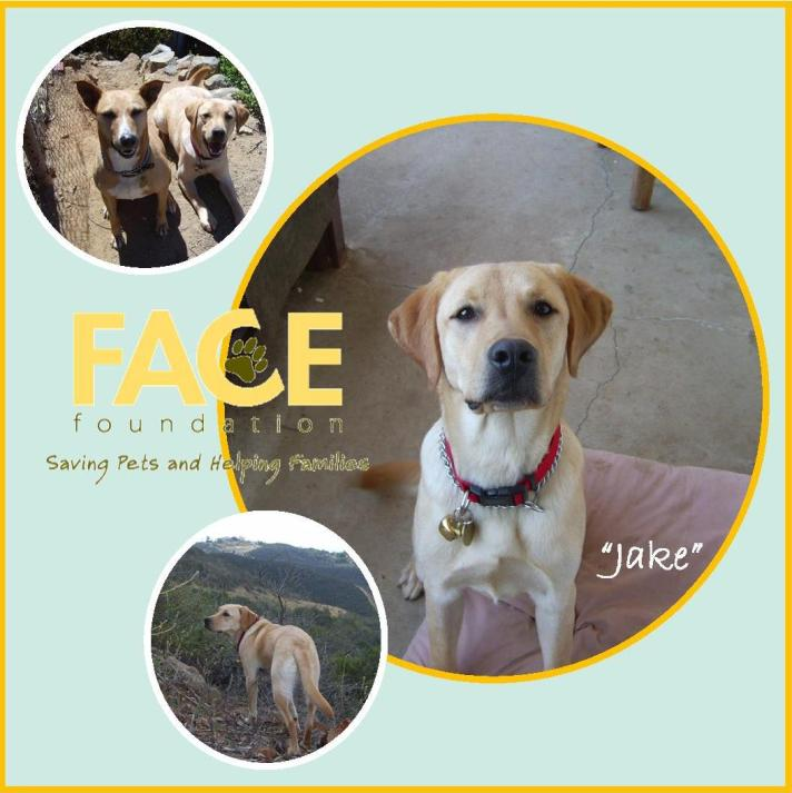 Meet Jake!