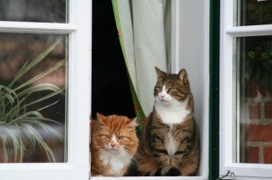 Cats Window