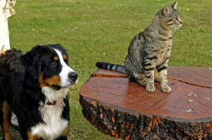 Dog and Cat2