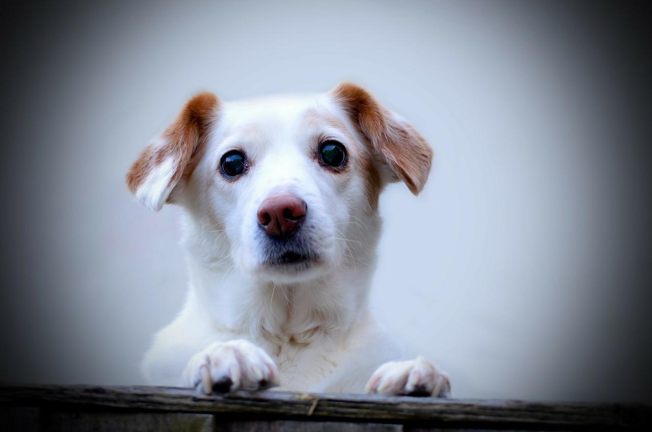 New California Animal Welfare Legislation - FACE Foundation