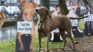 DogsTrust3