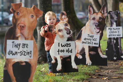 A Puppy for Christmas? Stop Before You Shop or Adopt! – FACE ...