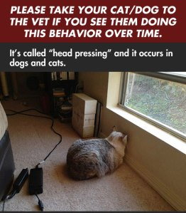 Head pressing-Cat