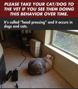 Head pressing-Cat