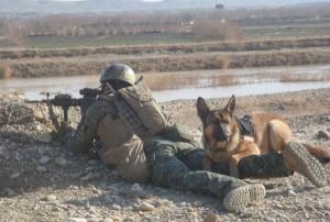 MilitaryDogsLucca