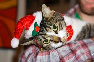 Cat Christmas1
