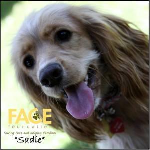 FACE Dog
