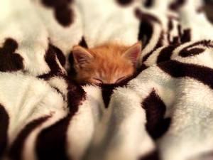 FACE Kitten