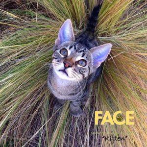 FACE Kitten1