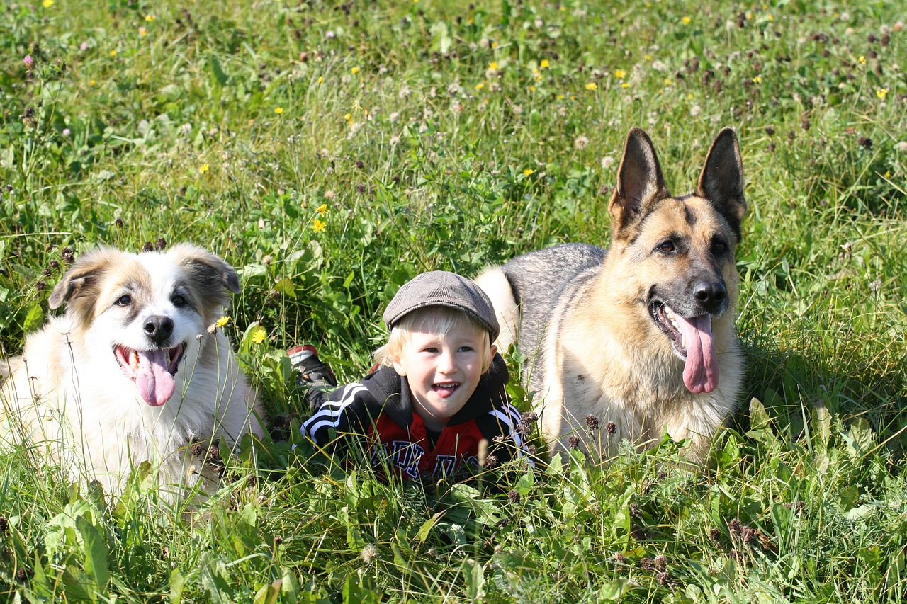 Pets Help Children With Autism Face Foundation