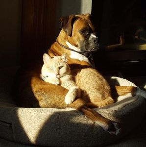 Dog and Cat1