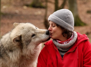 Dog's social skills were already present in the wolf. (Photo: Wolf Science Center)