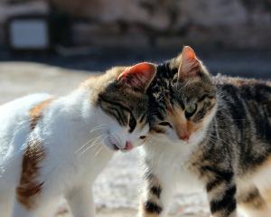 Cat Health2