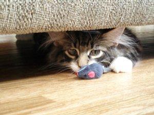 Dimitri Mouse