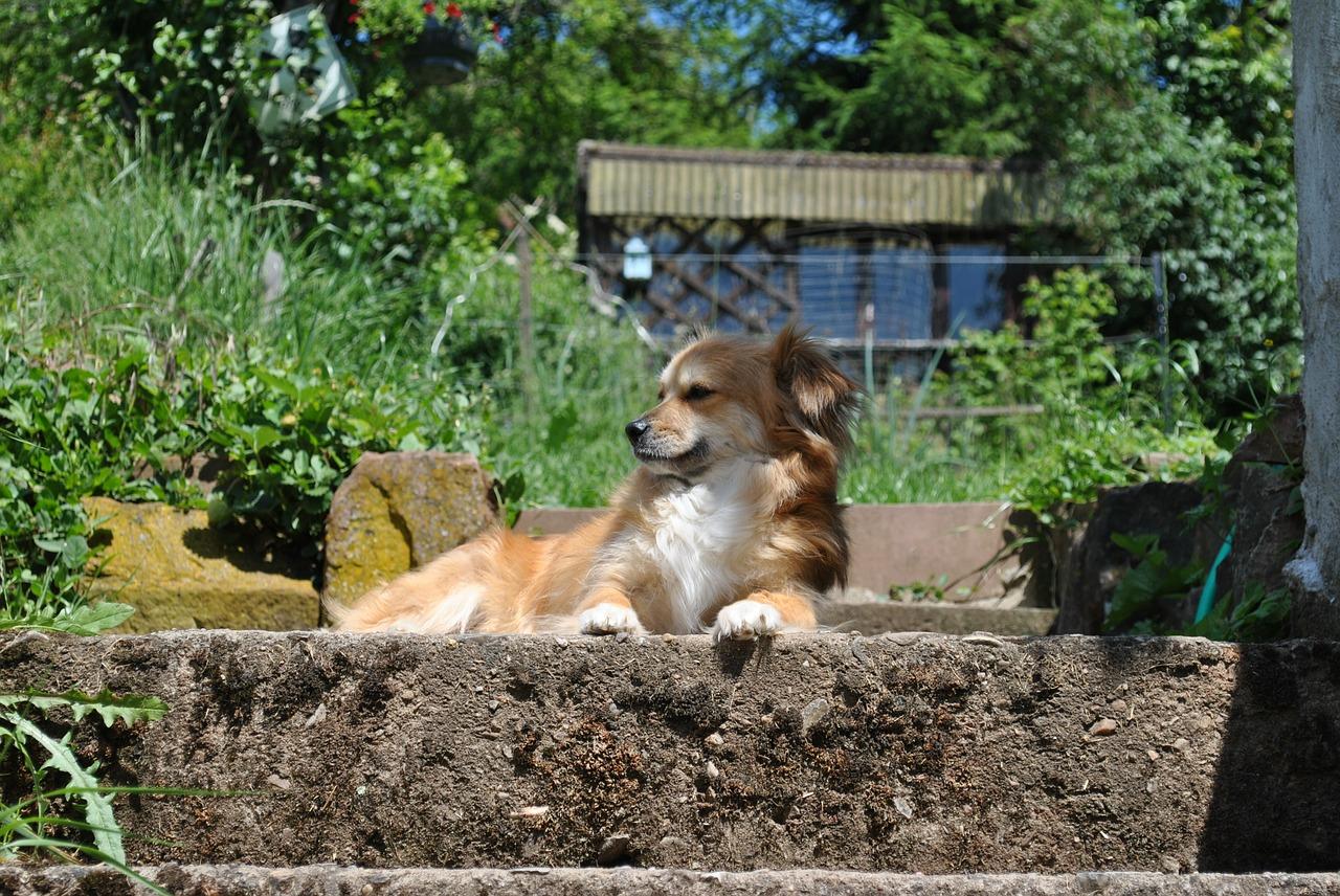 Dog Friendly Backyard Ground Cover : Dog in Garden1