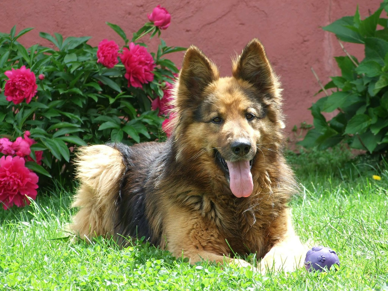 Face Foundation Dog Friendly Landscaping Ideas