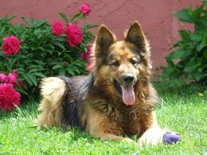 Dog in Garden2