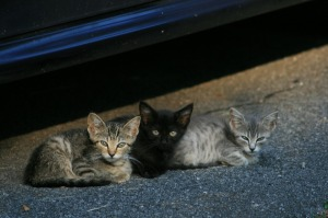 Orange ribbon cats