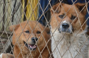 Orange ribbon dogs