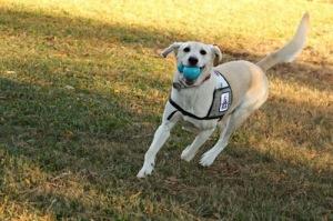 Hero Dog3