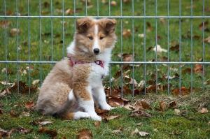 New puppy3