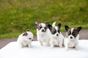New puppy4