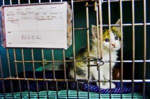 Shelter cat1