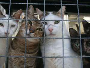 Shelter cat2