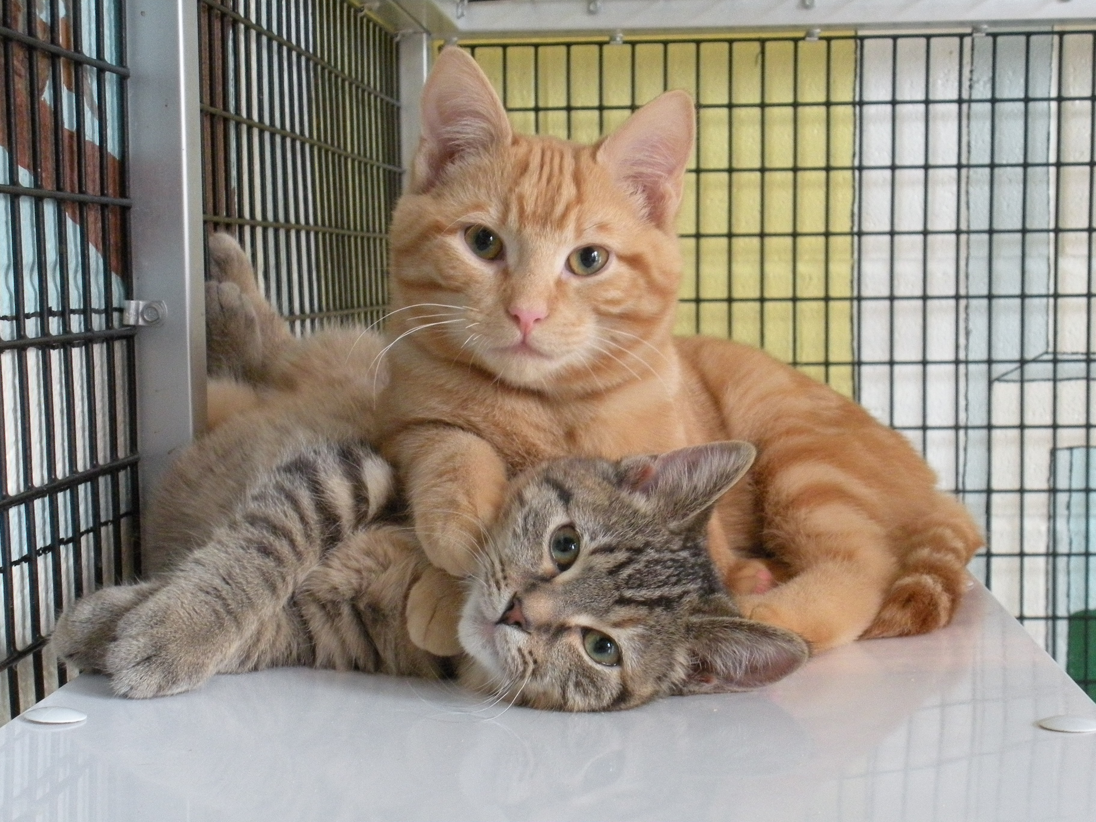 pet insurance including spaying