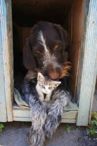 Shelter_dog and cat
