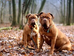 Shelter_guard dog