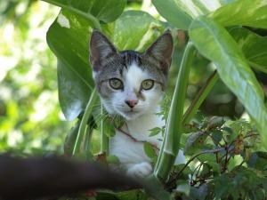Cat toxin1