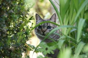 Cat toxin2