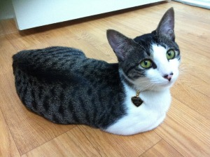 First aid_cat