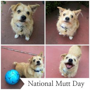 Mutt day2