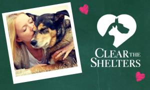 Clear Shelters2
